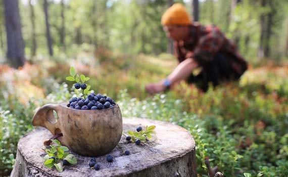 Sfeerimpressie De smaak van Lapland fly & drive